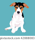Adorable cute jack russell terrier dog sitting. 42888083