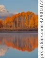 秋天 秋 大提顿国家公园 42901072