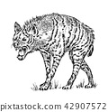 African spotted hyena. Wild animal. Engraved hand drawn old monochrome Vintage sketch. 42907572