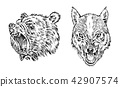 Portrait of Grizzly Bear. The face of the forest wolf. Head of a wild animal. angry roar of a 42907574