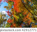 가을, 단풍, 자연 42912771
