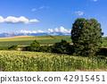 landscape, scenery, scenic 42915451