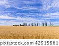 언덕 마을 비 에이의 마일드 세븐의 언덕 42915961