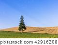 landscape, scenery, scenic 42916208