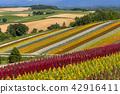 flower, garden, field 42916411