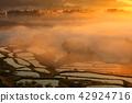 在土坎2018年的稻田 42924716
