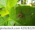 蟲子 漏洞 昆蟲 42928229