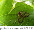 蟲子 漏洞 昆蟲 42928231