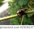 蟲子 漏洞 昆蟲 42928237
