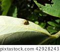 蟲子 漏洞 昆蟲 42928243