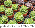 green cactus pot 42929292