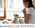 Mixed Race teenage girl teaching pomeranian dog to do a trick on the bed. 42930265