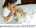 Mixed Race teenage girl teaching pomeranian dog to do a trick on the bed. 42930267