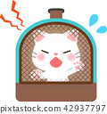 แมว,สัตว์เลี้ยง,พื้นหลังสีขาว 42937797