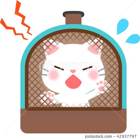 猫 猫咪 小猫 42937797