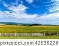 여름의 홋카이도 신영의 언덕 전망 공원 42939226