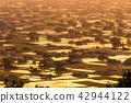 《富山県》富山の絶景・砺波平野、散居村の夕景 42944122