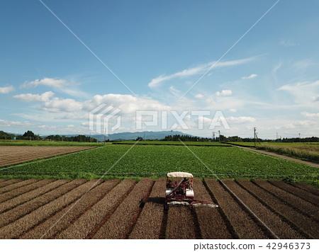 Farm work 42946373