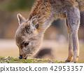 一只鹿 42953357