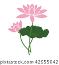 Nature flower pink lotus 42955042