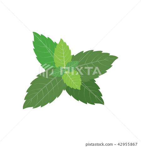 Nature organic vegetable Mint 42955867