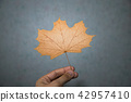 dried maple leaf in fingers  42957410