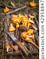 Yellow chanterelle mushrooms on wooden background. Gourmet food 42958847