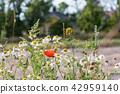 Garden summer flowers 42959140