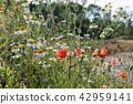 Summer flowers closeup 42959141