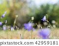 One focused bluebell flower 42959181
