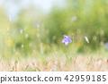 Bellflower in bright summer light 42959185