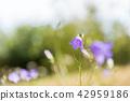 Beautiful blue summer flower 42959186