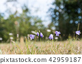 Beautiful blue summer flower 42959187