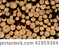 Closeup of logs of trees in nature  cutted logs  42959364