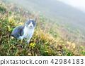 Cat on green meadow closeup 42984183