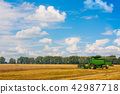 Combine harvesting Wheat plants in the field 42987718