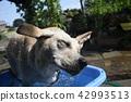 拉布拉多犬 中暑 拉布拉多狗 42993513