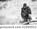 gorilla, silver back 42994652