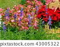 背景 花園 花 43005322