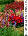 背景 花園 花 43005325