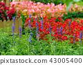 士林官邸花卉 台湾台北士林官邸の植物 Presidential Residence Garden 43005400