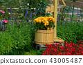 背景 花園 花 43005487