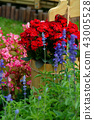 背景 花園 花 43005528