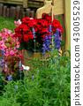 背景 花園 花 43005529