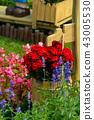 士林官邸花卉 台湾台北士林官邸の植物 Presidential Residence Garden 43005530