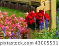 士林官邸花卉 台湾台北士林官邸の植物 Presidential Residence Garden 43005531