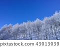 藏王的雲冰 43013039