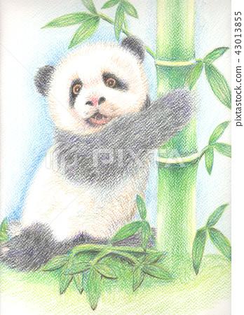 水性色鉛筆熊貓 43013855