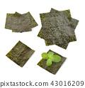 seaweed on white background 43016209