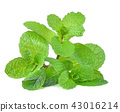 mint leaves isolated on white background 43016214
